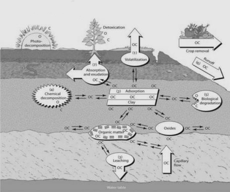 بیماری های چاپ و آلودگی های خاک با فلزات سنگین